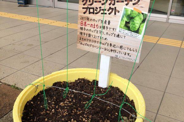 横手駅東口のホップのグリーンカーテンもスタート!